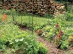 jardin-agroecologique.jpg