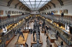 museum-d-histoire-naturelle.jpg