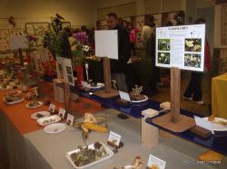 verdilly-expo-de-champignons-4-001.jpg