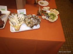 verdilly-expo-de-champignons-5-001.jpg